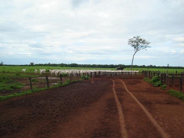 Fazenda 6,000 ha Vale do Araguaia MT. Cinematográfica
