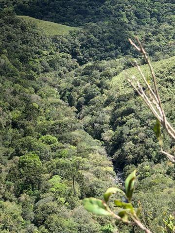 Fazenda 86 hectares Cazuza Ferreira - Foto 7