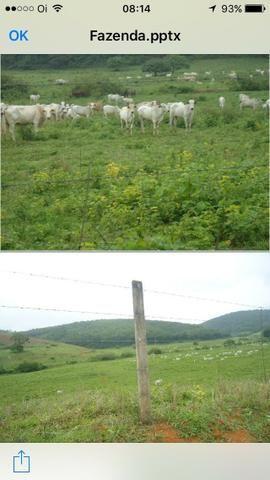 Venda-se está fazenda de 323 Alqueires no Estado de minas Gerais/MG