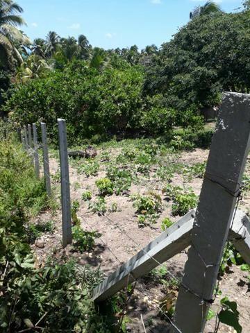 Terreno lindo em Japaratinga, proximo a praia e as bicas 950 m2 - Foto 2
