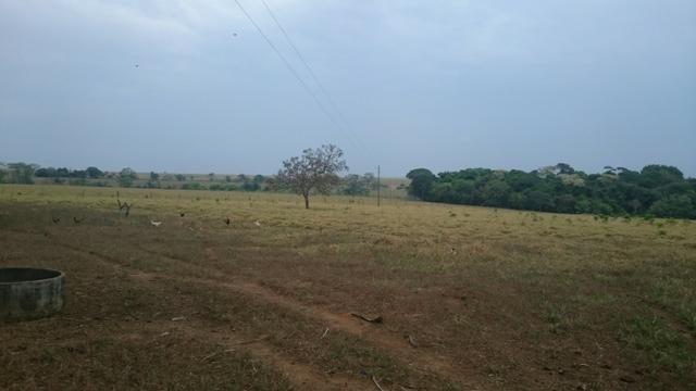 Fazenda para lavoura de 44 alqueires a venda na região de Caldas Novas GO - Foto 6