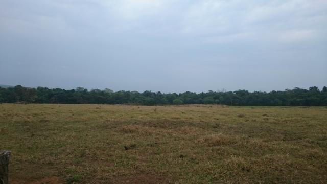 Fazenda para lavoura de 44 alqueires a venda na região de Caldas Novas GO - Foto 4
