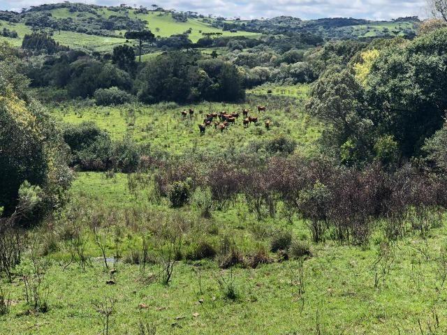 Fazenda 86 hectares Cazuza Ferreira - Foto 5