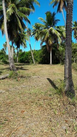 Patacho, venha morar ou ter um negocio em uma das praias mais belas do país. - Foto 10