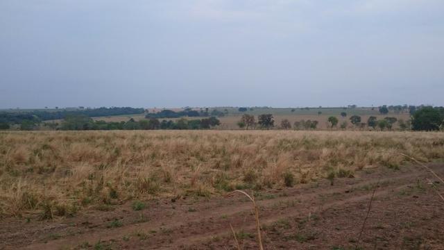 Fazenda para lavoura de 44 alqueires a venda na região de Caldas Novas GO - Foto 12