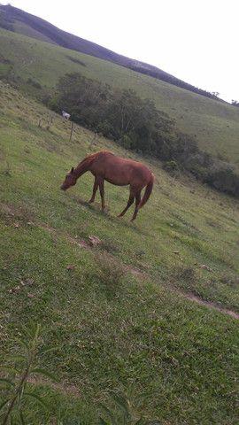 Egua de 10 meses - Foto 2