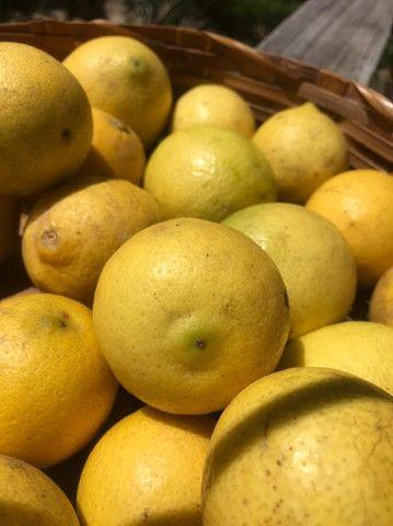 Frutas Congeladas e naturais - Foto 3