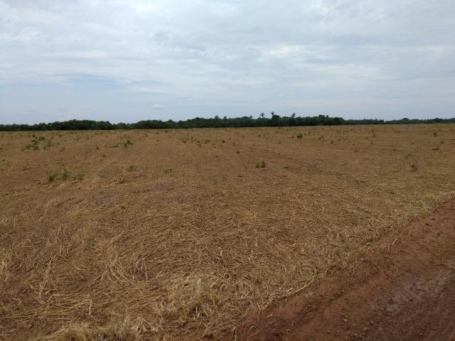 Fazenda 9.900 ha São Felix Do Araguaia - Foto 10