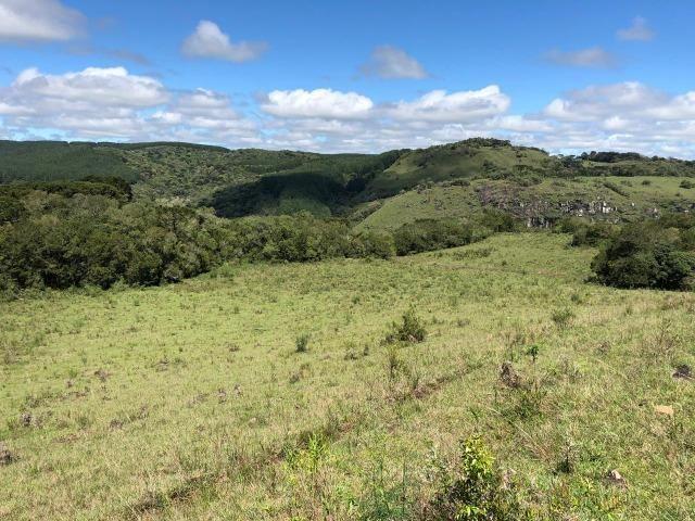 Fazenda 86 hectares Cazuza Ferreira - Foto 3