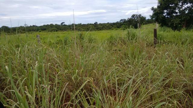 Vendo Fazenda com 1.523 Hectares na região do Manso - Foto 10