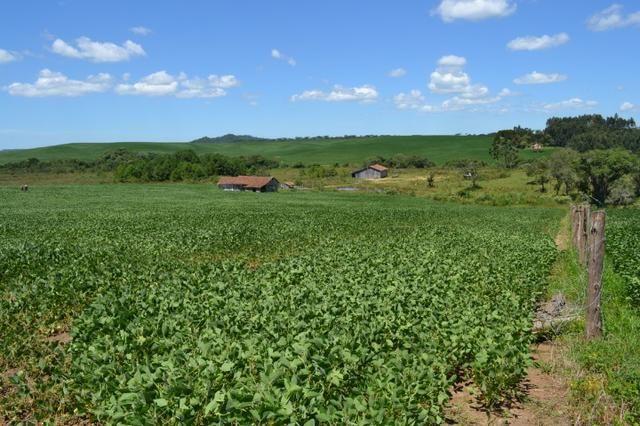 Oportunidade Produtor Rural Terreno em Bela Vista do Toldo - Foto 2