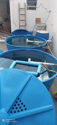 Aquário em Caixa D'água - Foto 2