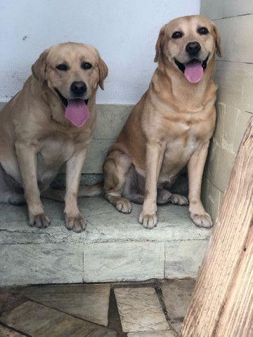 2 machos Disponível para cruza