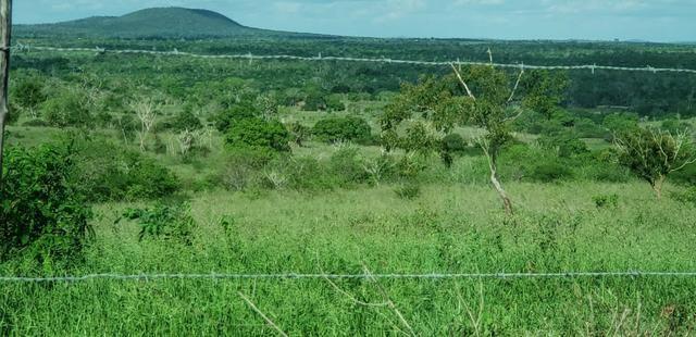 Maravilhosa fazenda na região rural de Baixa Grande Bahia, a 150 km de Feira de Santana - Foto 14