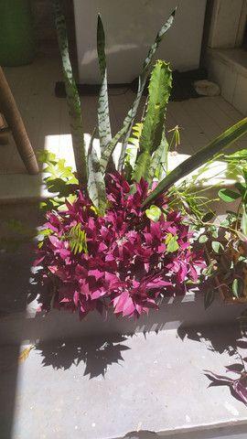 Arranjo grande de plantas.  - Foto 2
