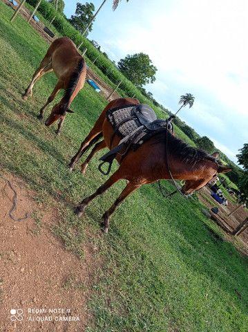 Égua e cavalo - Foto 5