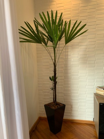 Vaso com planta  - Foto 2