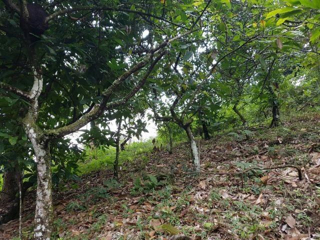 FZ 037- Fazenda Próximo a Ipiaú ? BA com 30 hectares. - Foto 13