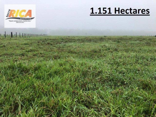 Fazenda a venda com 1.151 hectares no município de Canutama- AM