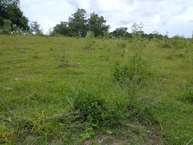 Sítio, Chácara a Venda em Porangaba e Região 48.400 m², 2 Alqueres, Zona Rural - Porangaba - Foto 18
