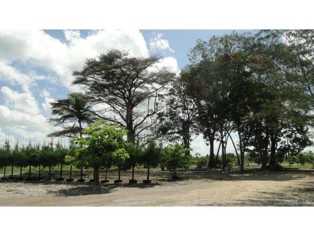 A.O chacara em igarassu  - Foto 4