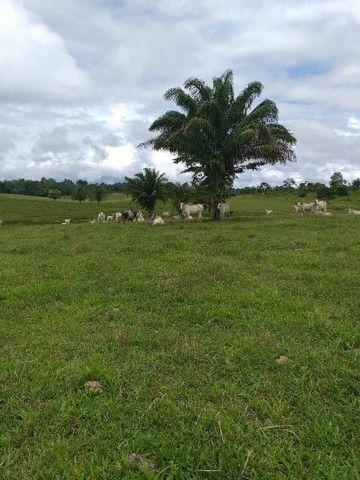 Vendo área de terra  - Foto 5