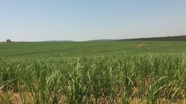 Fazenda 41 alqueires em Brodowisk 4.300.000.00 - Foto 2