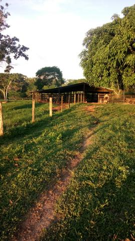 Propriedade rural - Foto 4