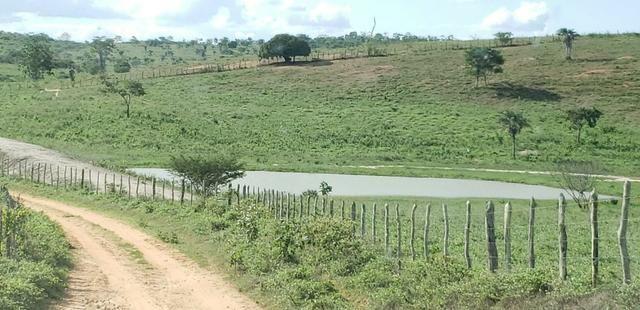 Maravilhosa fazenda na região rural de Baixa Grande Bahia, a 150 km de Feira de Santana - Foto 20