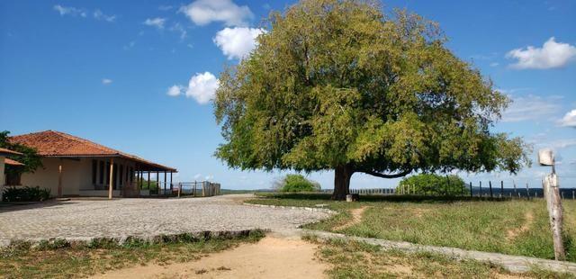 Maravilhosa fazenda na região rural de Baixa Grande Bahia, a 150 km de Feira de Santana - Foto 16