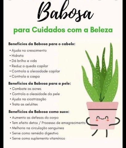 Babosa  - Foto 2