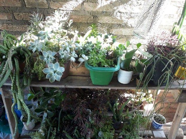 Mudas de plantas à venda, tenho diversidades  - Foto 3