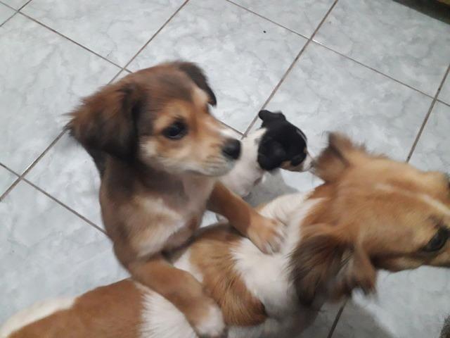 Adote um cãozinho lindo