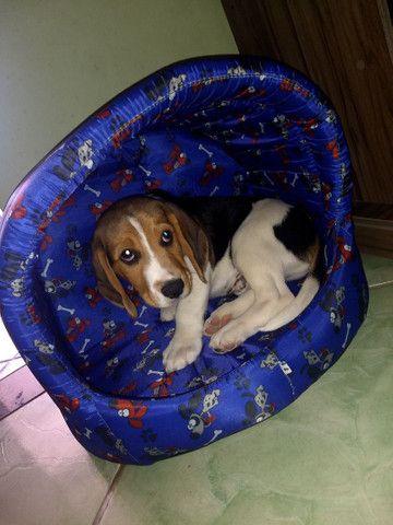 Vendo ou troco Beagle