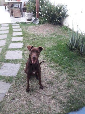 Doação de um lindo cachorro - Foto 2