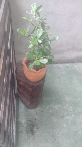 Plantas com vasos - Foto 3