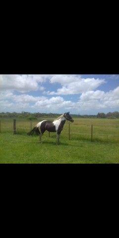 Vendo lindo cavalo - Foto 5