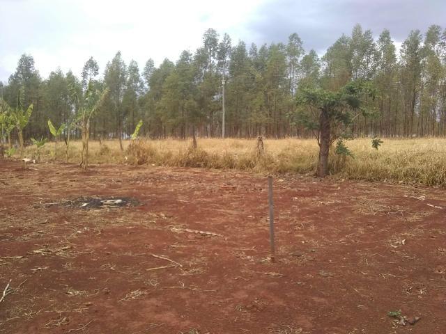 Fazenda Curral do fogo 23 hectares - Foto 3