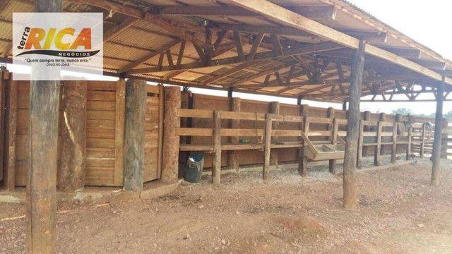 Fazenda a venda com 1.151 hectares no município de Canutama- AM - Foto 8