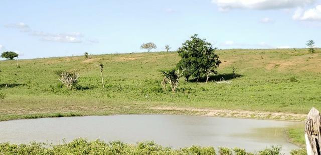Maravilhosa fazenda na região rural de Baixa Grande Bahia, a 150 km de Feira de Santana - Foto 19