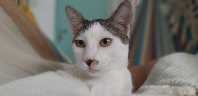 Adoção de gato macho resgatado  - Foto 4