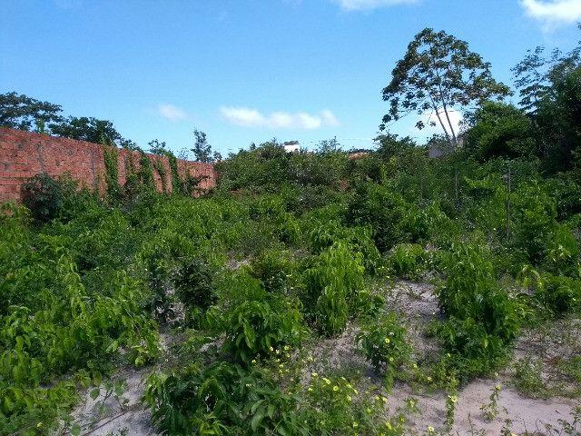 Terreno Araçagi - Foto 3