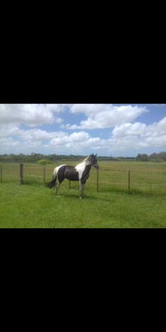Vendo lindo cavalo - Foto 3