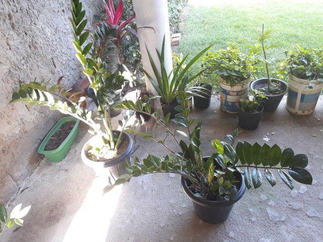 Mudas de plantas à venda, tenho diversidades  - Foto 2