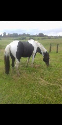 Vendo lindo cavalo - Foto 4