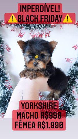 *Black Friday* Yorkshire Macho R$990