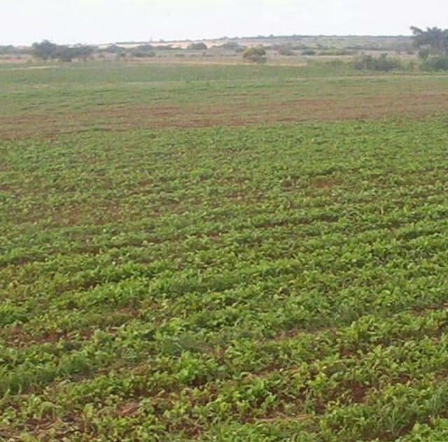 Fazenda com 90 ha em João Dourado - Foto 3