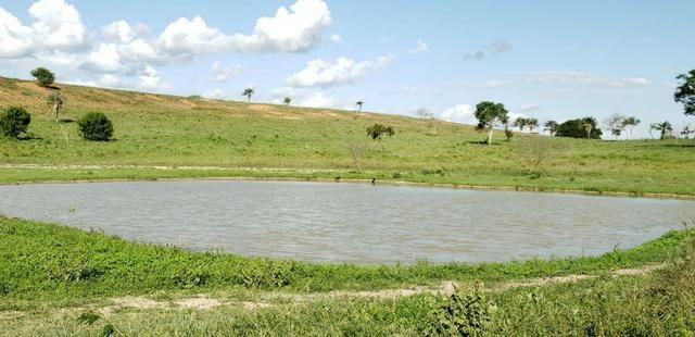Maravilhosa fazenda na região rural de Baixa Grande Bahia, a 150 km de Feira de Santana - Foto 15