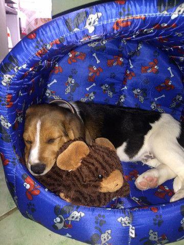 Vendo ou troco Beagle - Foto 2