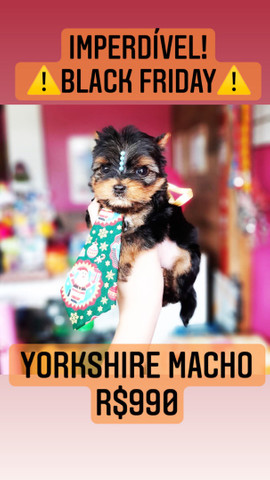Yorkshire  - Foto 2
